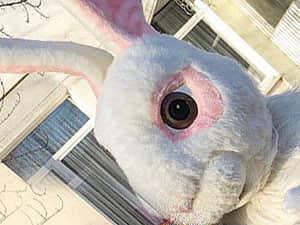 Ростовая кукла белый кролик аренда прокат